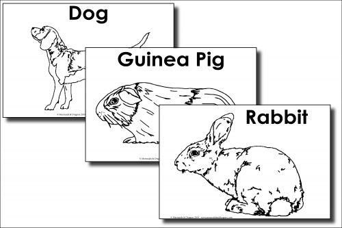 My Pet colouring pages